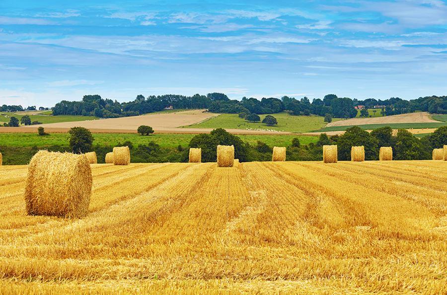 Image de la catégorie Récolte